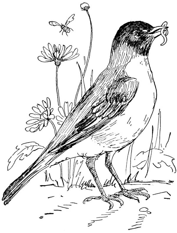 coloring pages of robins - photo#2
