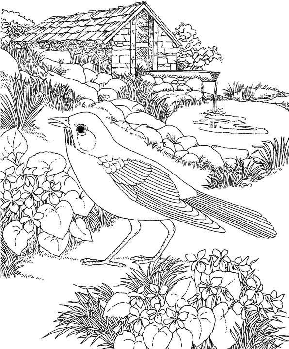 Robin bird coloring pages for kids ~ A to Z Kids Stuff| American Robin Color Page