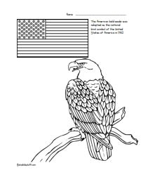 bald eagle usanational bird symbol color page - American Bald Eagle Coloring Page