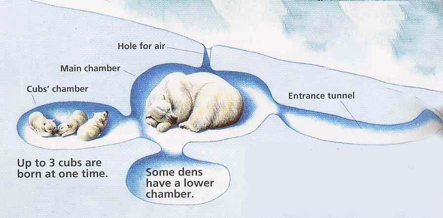 A To Z Kids Stuff Polar Bear Facts For Children - Map of where polar bears live