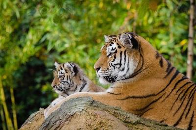 stuff the tiger long live extinction