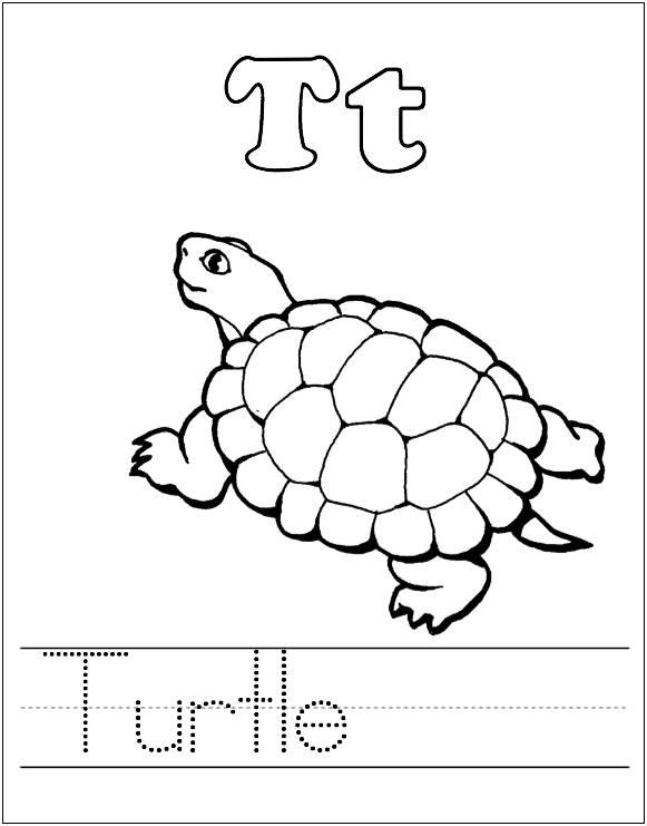 A To Z Kids Stuff T For Turtle