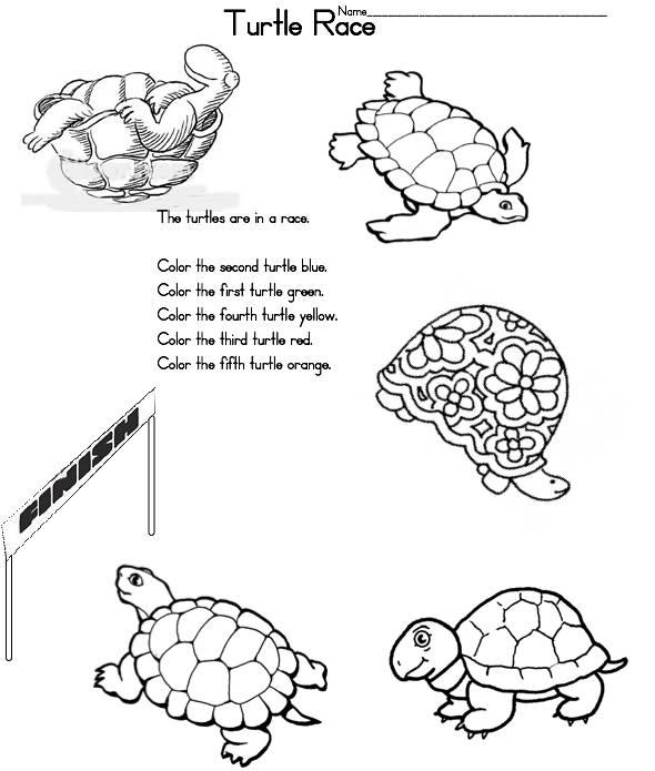 Turtlerace on Frog Life Cycle Printable